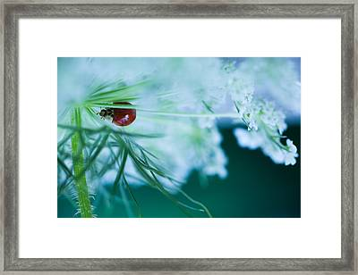 Lady In Lace Framed Print by Sue OConnor