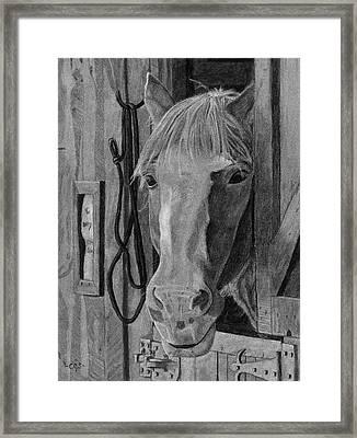 Lady - Print Framed Print by Christina Steward