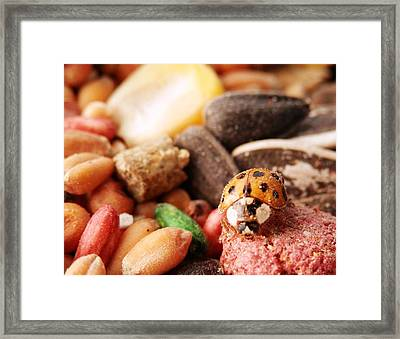 Lucky Ladybug At The Park Framed Print by Belinda Lee