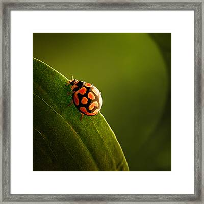 Ladybug  On Green Leaf Framed Print by Johan Swanepoel