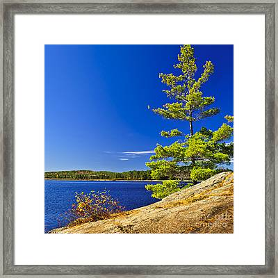 Lake Shore In Ontario Framed Print by Elena Elisseeva