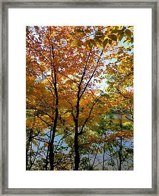 Lake View Through Autumn Tree 2 Framed Print by Lanjee Chee