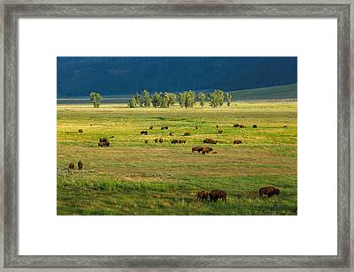 Lamar Valley Framed Print by Todd Klassy