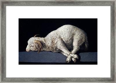 Lamb Of God. Agnus Dei Framed Print by Francisco de Zurbaran