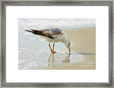 Land Sea And Sky Series 2 Framed Print by Angela Rath