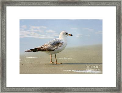Land Sea And Sky Series Framed Print by Angela Rath