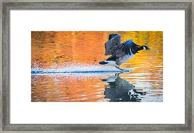 Landing In Autumn Colors Framed Print by Parker Cunningham