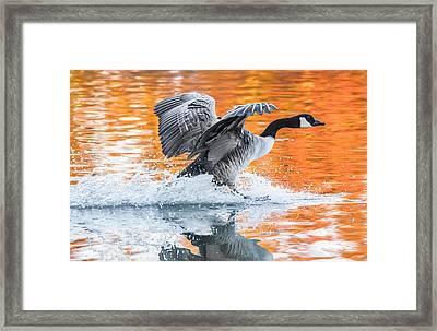 Landing Framed Print by Parker Cunningham