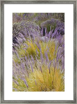 Landscape With Purple Grasses Framed Print by Ben and Raisa Gertsberg