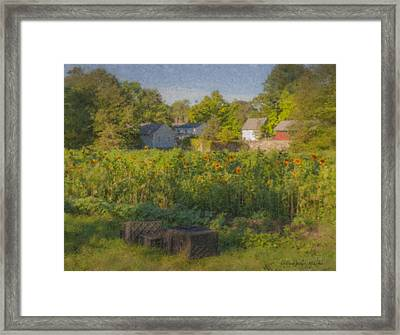 Langwater Farm Sunflowers And Barns Framed Print by Bill McEntee