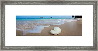 Lanikai Paper Nautilus Framed Print by Sean Davey