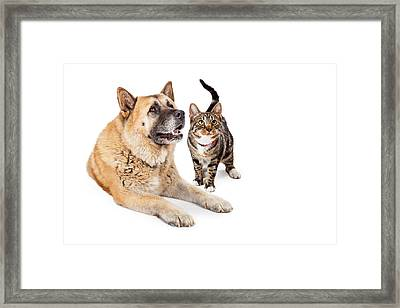Large Dog And Cat Looking Up Together Framed Print by Susan  Schmitz