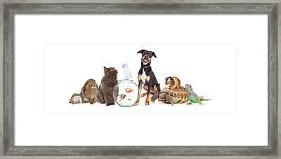 Large Group Of Pet Animals Together Framed Print by Susan Schmitz