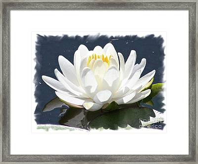 Large Water Lily With White Border Framed Print by Carol Groenen