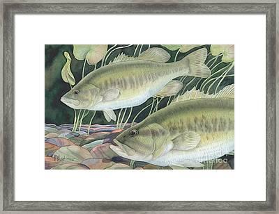 Largemouth Bass Framed Print by Paul Brent