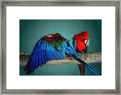 Las Aves Pequenas Framed Print by Paul Wear