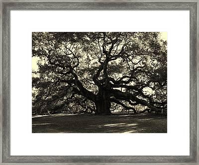 Last Angel Oak 72 Framed Print by Susanne Van Hulst