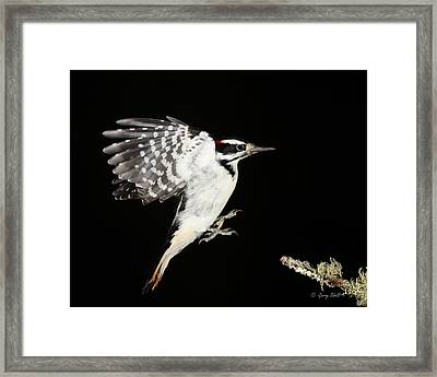 Last Call Framed Print by Gerry Sibell