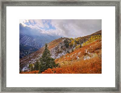 Last Fall Framed Print by Chad Dutson