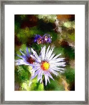 Last Rose Of Summer Framed Print by David Lane