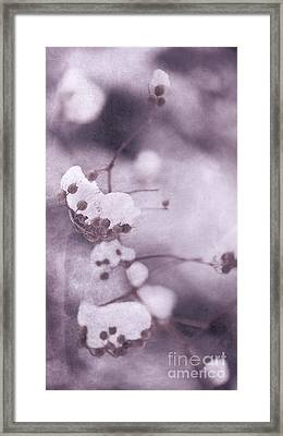 Last Winter Framed Print by Angela Doelling AD DESIGN Photo and PhotoArt