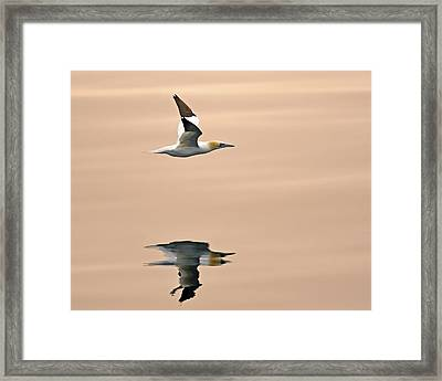 Late Arrival Framed Print by Tony Beck