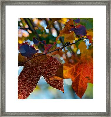 Late Autumn Colors Framed Print by Stephen Anderson