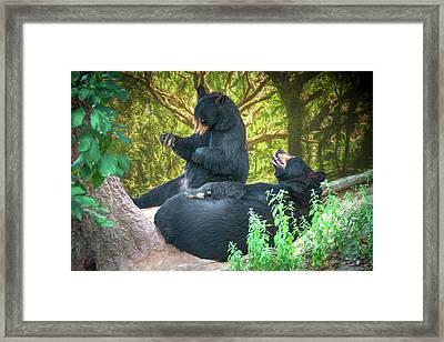 Laughing Bears Framed Print by John Haldane
