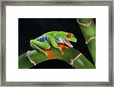 Laughter In The Rainforest Framed Print by Paul Bratescu
