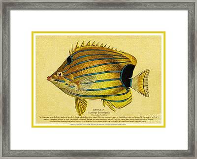 Lauhau - Bluestripe Butterflyfish Framed Print by James Temple