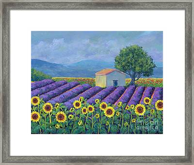 Lavender Framed Print by Danielle Perry