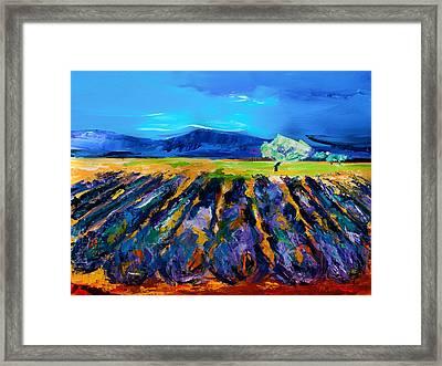 Lavender Field Framed Print by Elise Palmigiani