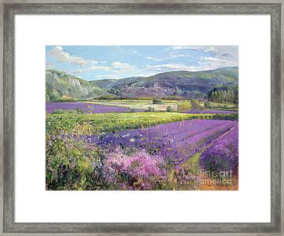Lavender Fields In Old Provence Framed Print by Timothy Easton