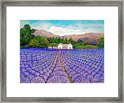 Lavender Fields Framed Print by Michael Durst