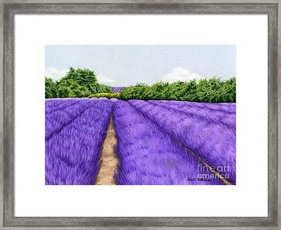Lavender Fields Framed Print by Sarah Batalka