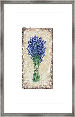 Lavender II Framed Print by Danielle Perry