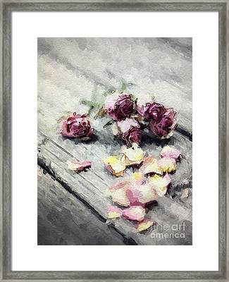 Lavender Roses And Petals Framed Print by Amy Cicconi