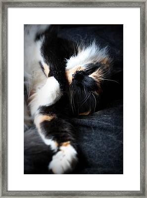 Lazy Days Framed Print by Mandy Shupp