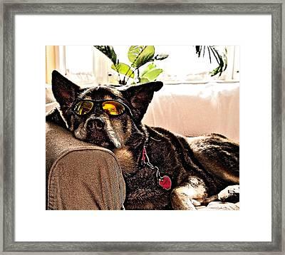 Lazy Dog Framed Print by Jim DeLillo