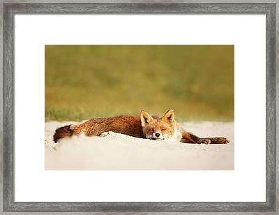 Lazy Fox Is Lazy II Framed Print by Roeselien Raimond