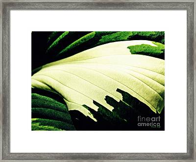 Leaf Abstract 7 Framed Print by Sarah Loft