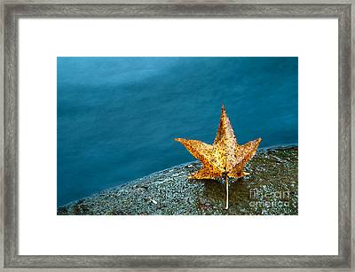 Leaf Framed Print by Chris Mason