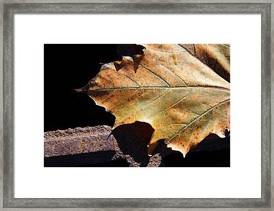 Leaf Detail Framed Print by  Judy Bernier