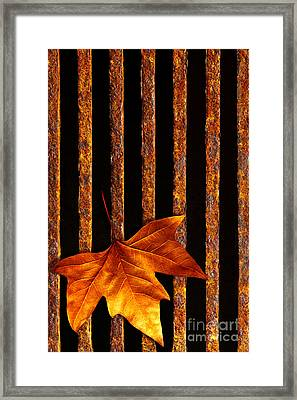 Leaf In Drain Framed Print by Carlos Caetano