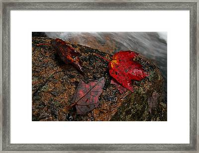 Leaf Macro Framed Print by Juergen Roth