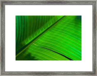 Leaf Me Alone Framed Print by Paul Wear