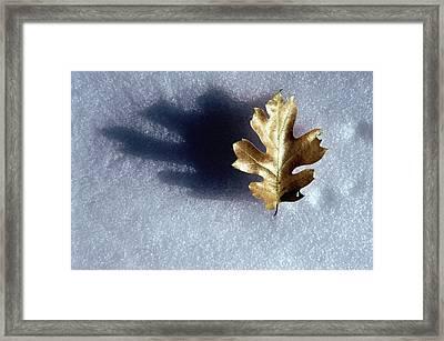 Leaf On Snow Framed Print by Paul Wear