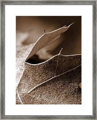 Leaf Study In Sepia II Framed Print by Lauren Radke
