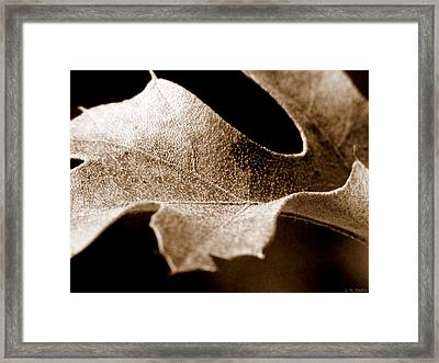 Leaf Study In Sepia Framed Print by Lauren Radke
