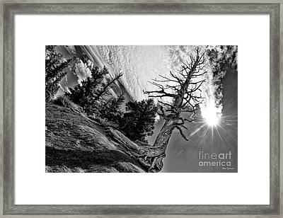 Leafless Life Framed Print by Blake Richards